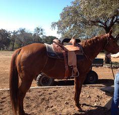 New saddle... You like(:?