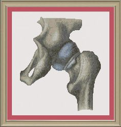 Human hip  nerdy anatomy crossstitch by nerdylittlestitcher, $3.00