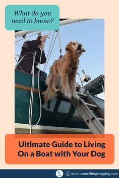 Do you dream of living on a boat and cruising full time with your dog? Here's everything you need to think about before making that big move. Sailboat Living, Living On A Boat, Dogs On Boats, Buy A Boat, Best Boats, Dog Anxiety, Big Move, Kinds Of Dogs, Training Your Dog