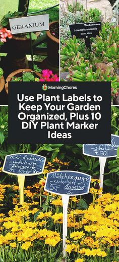 How to Use Plant Labels to Keep Your Garden Organized (and 10 DIY Plant Marker Ideas) Garden Labels, Plant Labels, Plant Markers, Garden Markers, Hydroponic Farming, Hydroponics, Outdoor Plants, Garden Plants, Eco Garden