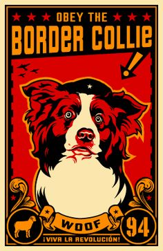 Obey the Border Collie!