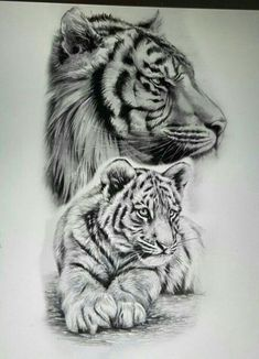 Realistic tiger half sleeve best tattoo design ideas - we use cookies on ta Pencil Art Drawings, Animal Drawings, Tattoo Drawings, Body Art Tattoos, Sleeve Tattoos, Tiger Drawing, Tiger Art, Tiger Tattoo Design, Tattoo Schwarz