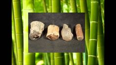 Bamsa Mukta or Bamboo Gem, Forms within old bamboo tree. They're quite transparent and elongated in shap. Bamboo Tree, Latin Words, Occult, The Cure, Gems, Youtube, Rhinestones, Jewels, Gemstones