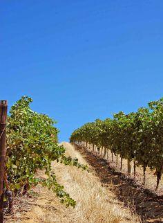 A visit to Anthonij Rupert Wines Wines, Vineyard, Africa, Menu, Ford, Outdoor, Menu Board Design, Outdoors, Vine Yard