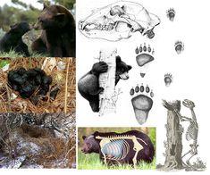 Animal Footprints, Animal Tracks, Bear Art, Moose Art, Survival, Animals, Education, Geography, Artists