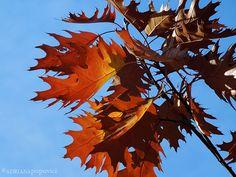 Oak Leaves Oak Leaves, Art, Art Background, Oak Leaf Cluster, Kunst, Performing Arts, Art Education Resources, Artworks