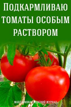 Small Farm, Garden Seeds, Plantar, Growing Plants, Agriculture, Vegetable Garden, Stuffed Peppers, Vegetables, Outdoor