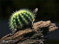 Cactus+Tortoise+Photoshop+Image+Manipulation+Animal+Hybrid.jpg (320×240)
