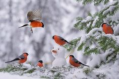 Find images and videos about winter, bird and snowman on We Heart It - the app to get lost in what you love. Pretty Birds, Love Birds, Beautiful Birds, Animals Beautiful, Cute Animals, Hirsch Illustration, Gif Disney, Bullfinch, Colorful Birds