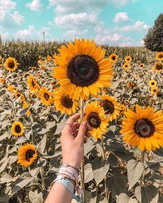 Sunflower Meaning; Sunflower Garden, Sunflower Art, Sunflower Fields, Golden Flower, My Flower, Yellow Flowers, Beautiful Flowers, Flowers Nature, Beautiful Pictures