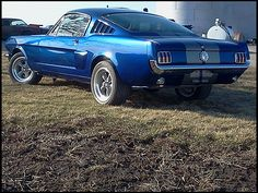 1966 Ford Mustang Fastback my ultimate dream car! - Elise Little