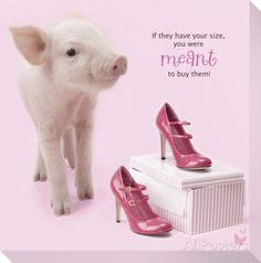 In The Pink! - High Heel Pig 1 Stretched Canvas Print at AllPosters.com