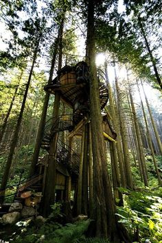 I'd Gladly Live in this Treehouse.