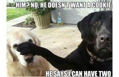 Yes, This Is Dog: 31 Of The Best Dog Memes Ever (Slide #12) - Pawsome