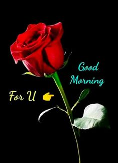 Good Morning Monday Images, Good Morning Friends Images, Good Morning Coffee Gif, Good Morning Beautiful Pictures, Good Morning Wednesday, Good Morning Images Flowers, Good Morning Roses, Good Night Love Images, Cute Good Morning