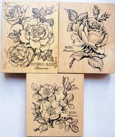 Tattoo ideas Botanical Rose Cabbage Hybrid Wild Rosa