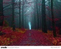 Siyah Orman, Almanya