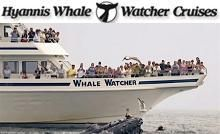 Highlight your Cape Cod vacation with an unforgettable cruise aboard the Mid-Cape's only Whale Watch, sailing mid-April through October from picturesque Barnstable Harbor. Cape Cod Vacation, Vacation Planner, Whale Watching, Nantucket, The Locals, Highlight, Places Ive Been, Islands, Vacations