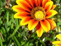 Quinta da Bonjóia [2008 - Porto / Oporto - Portugal]  #fotografias #flor #flores #flower #flowers