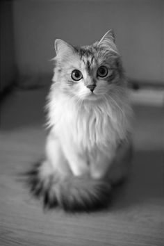 "#cute #kitten  ""On dirait Walou"" a dit Sarah."