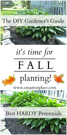 1000 Images About Bulbs Fall Plantings On Pinterest Bulbs In The Fall And Daffodils
