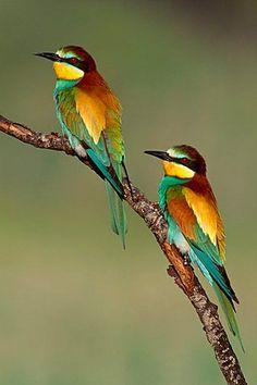 "High Quality Stock Photos of ""sardegna"" Cute Birds, Pretty Birds, Most Beautiful Birds, Animals Beautiful, Exotic Birds, Colorful Birds, Animals And Pets, Cute Animals, Photo Animaliere"