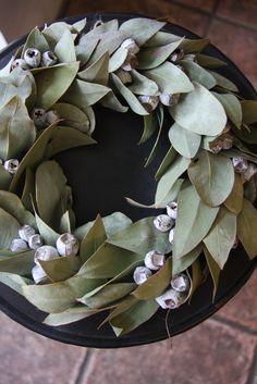 Eucalyptus tetragona