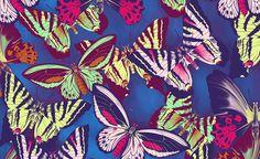 Carpintaria Estúdio - C - Desenvolvimento de ilustrações para estampas das coleções Primavera / Verão 2012
