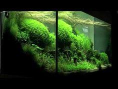 Aquascaping - Aquarium Ideas from The Art of the Planted Aquarium . Aquascaping - Aquarium Ideas from The Art of the Planted Aquarium . Planted Aquarium, Live Aquarium Plants, Aquarium Fish Tank, Fish Tanks, Aquascaping, Fish Care, Aquarium Design, Colorful Plants, Plantar