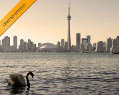 Toronto skyline with swan. Toronto Skyline, New York Skyline, Torre Cn, Cn Tower, Swan, Travel, Inspiration, Biblical Inspiration, Swans
