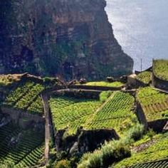Madeira Wine Region In Portugal - Wine Tours and Experiences Funchal, Trekking, Destinations, Paragliding, Tours, Spain And Portugal, Family Adventure, Island Life, Beautiful Islands