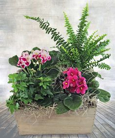 This beautiful African Violet Garden makes a perfect gift for any home or office. Two beautiful African Violet plants and and two green plant are combined in a rustic wooden planter creating a charming gift for any Flower Table Decorations, Flower Centerpieces, Flower Arrangements, Violet Garden, Violet Plant, Garden Basket, Plant Basket, House Plants Decor, Plant Decor