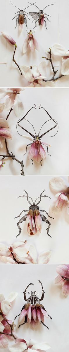 pink magnolia petals & black ink beetles by Kari Herer
