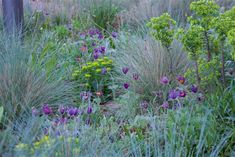 Pulsatillas in the Steppe plantings at The Barbican roof gardens, with Euphorbia polychroma and Helicotrichon sempervirens