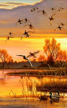 Waterfowl Duck and Conservation Stamps by Cynthie Fisher Evening Refuge Evening Refuge Mallards 18 x 24 The post Waterfowl Duck and Conservation Stamps by Cynthie Fisher appeared first on Fotografie. Hunting Art, Duck Hunting, Waterfowl Hunting, Wildlife Paintings, Wildlife Art, Wild Life, Beautiful Sunset, Beautiful Birds, Art Canard