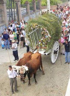 Romería Virgen de la Purísima de Benamargosa 2014 - Pueblos de Málaga