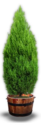 Artificial Grass Surrounding a Tree. Fake Grass and Imitation Grass Are The Same Thing Fake Grass, Planter Pots