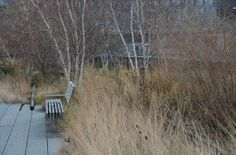 Birches planted within the railroad tracks in A Garden For All by Kathy Diemer http://agardenforall.com