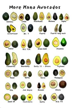 more avocados chef tattoo Exotic Fruit, Tropical Fruits, Fruit And Veg, Fruits And Vegetables, Fruit List, Herbs For Health, Desert Plants, Vegetable Salad, Gardens
