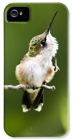 Hummingbird Flexibility iPhone 5 Case by Christina Rollo © www.rollosphotos.com #nature #animal #hummingbird #art #rollosphotos