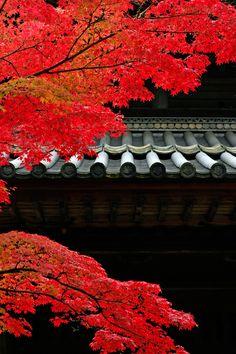 felixinclusis:jon7athan:In Autumn by Hiroshi Oka