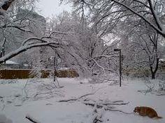 Google Image Result for http://myptsdservicedog.com/wp-content/uploads/2013/12/Toronto-Ice-Storm-2013-JAS-33.jpg