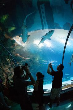 Mandalay Bay Shark Reef Aquarium Share, Like, Repin! Also find us at instagram.com/mightytravels