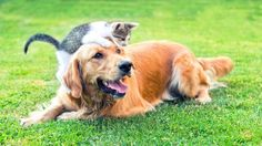Best Pets For College Students [That's Easy in Carry and Easy Care] tag:best furry pets for college students best pets for college apartments best pets for college dorms best pets for college grads best pets for college students top 10 best pets for college students best pets for kids/children
