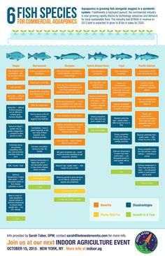 Infographic: Six Fish Species for Commercial Aquaponics