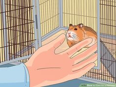 Veterinarian-Approved Advice on How to Care for a Hamster Guinea Pig Toys, Guinea Pig Care, Guinea Pigs, Chinese Hamster, Syrian Hamster, Humane Society, Bearded Dragon Vivarium, Hamster Names, Hamster Habitat