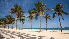Les palmiers à Ipanema Beach Rio De Janeiro au Brésil