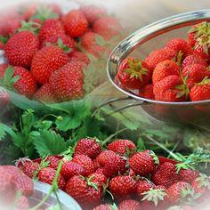 #nationalstrawberryday  #PhotoTangler www.phototangler.com