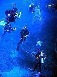 Scuba Diving the most exhilarating and the most terrifying all at the same time!