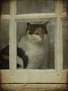 For some reason, I love photos of cats sitting on the window sill inside looking out...